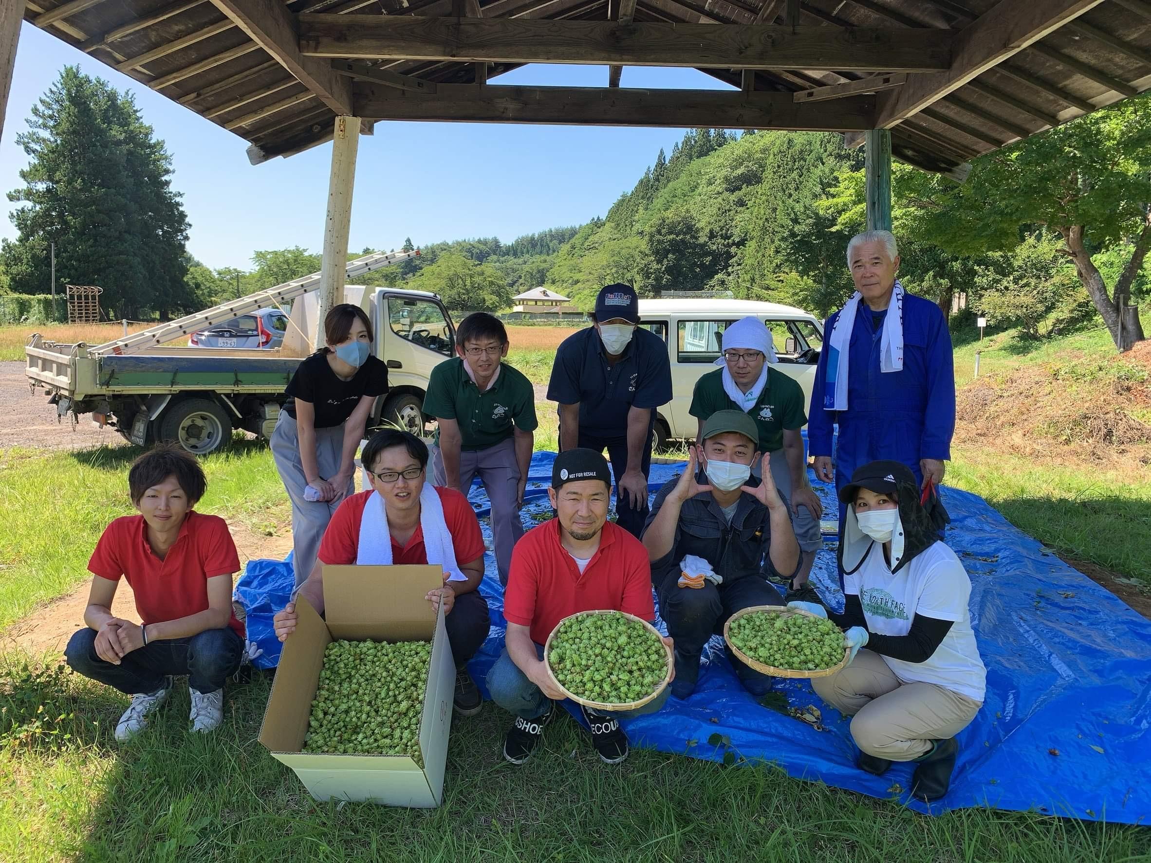 三戸町ホップ収穫